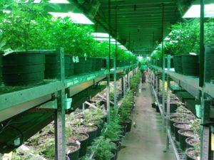 marijuana industry, personal injury attorney las vegas